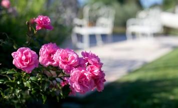 fiori-e-piante-pellegrini-garden