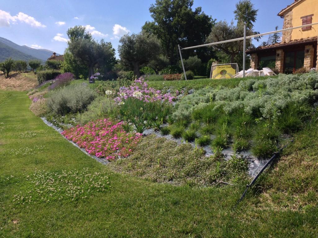 Piante Striscianti Per Scarpate : Scarpata fiorita pellegrini garden