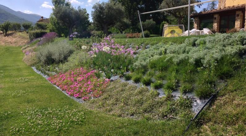 Piante Per Scarpate : Scarpata fiorita pellegrini garden