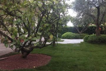 Small garden 6