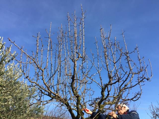 Corso di potatura alberi da frutto pellegrini garden for Potatura alberi da frutto