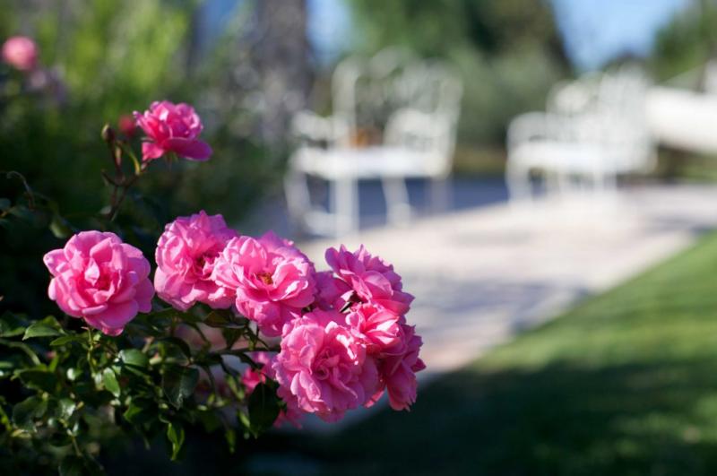Le realizzazioni Pellegrini Garden