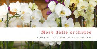 IL MESE DELLE orchidee