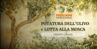 corso potatura dell'olivo e lotta alla mosca