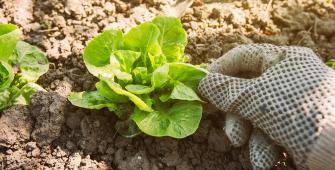 cosa-piantare-nell'orto