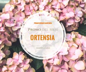 offerte del mese di aprile- ortensia