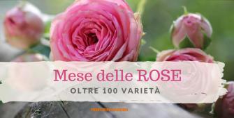 mese delle rose