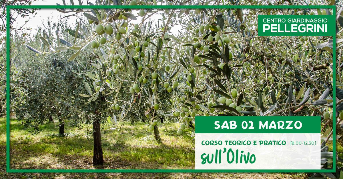 corso_olivo_centro_giardinaggio_pellegrini