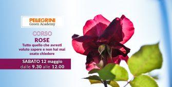 corso coltivazione rose
