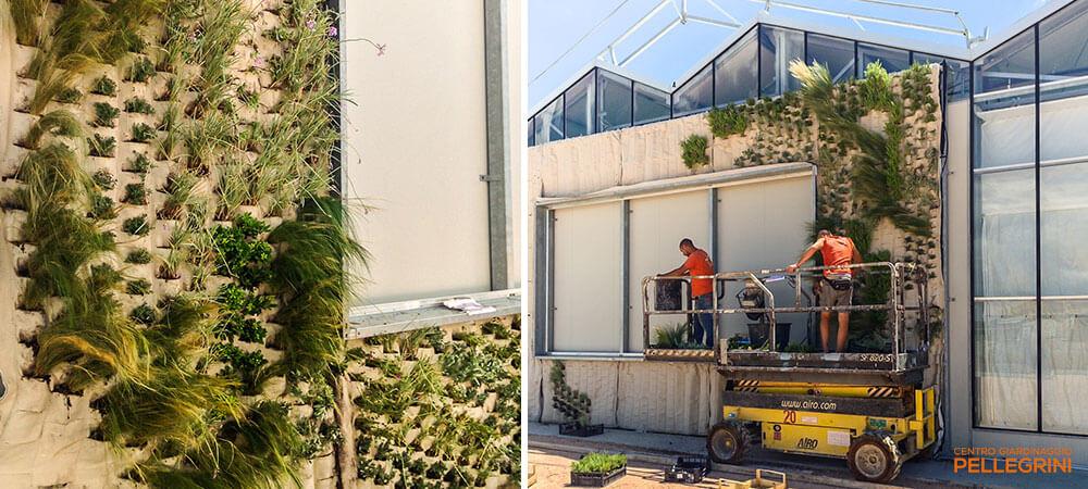 parete_verde_verticale_garden1