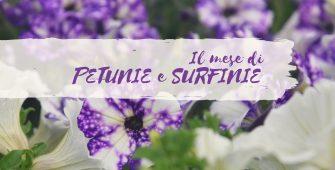 mese delle petunie e delle surfinie centro giardinaggio pellegrini