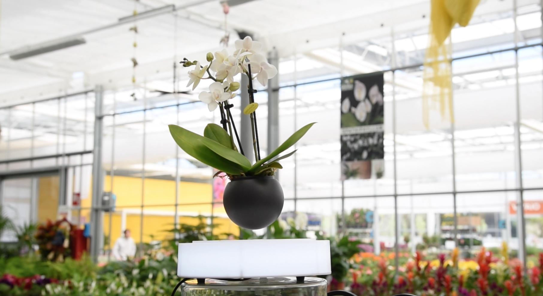 vaso magnetico centro giardinaggio pellegrini