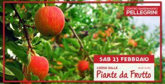 potatura piante da frutto