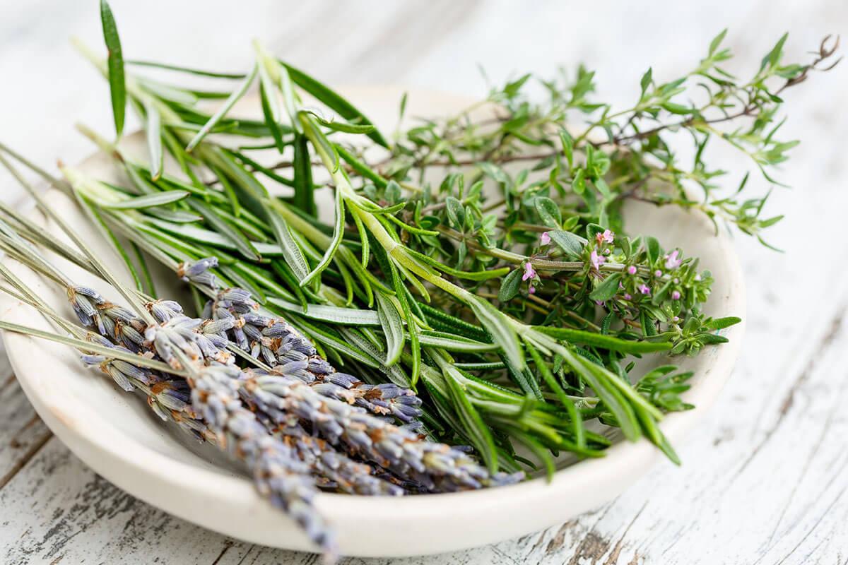 Pianta Simile Al Rosmarino quali sono le erbe aromatiche? guida all'uso delle piante