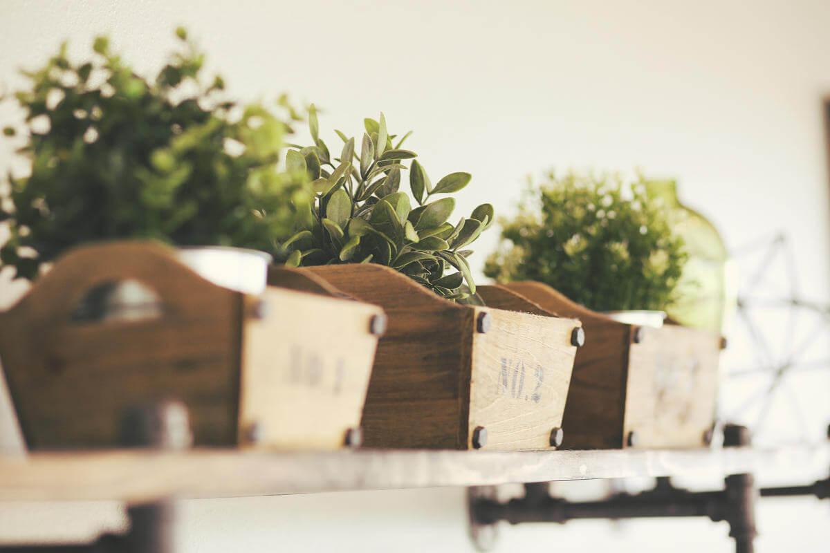 Fiori Da Piantare Nell Orto coltivare erbe aromatiche in casa: il tuo orto domestico segreto
