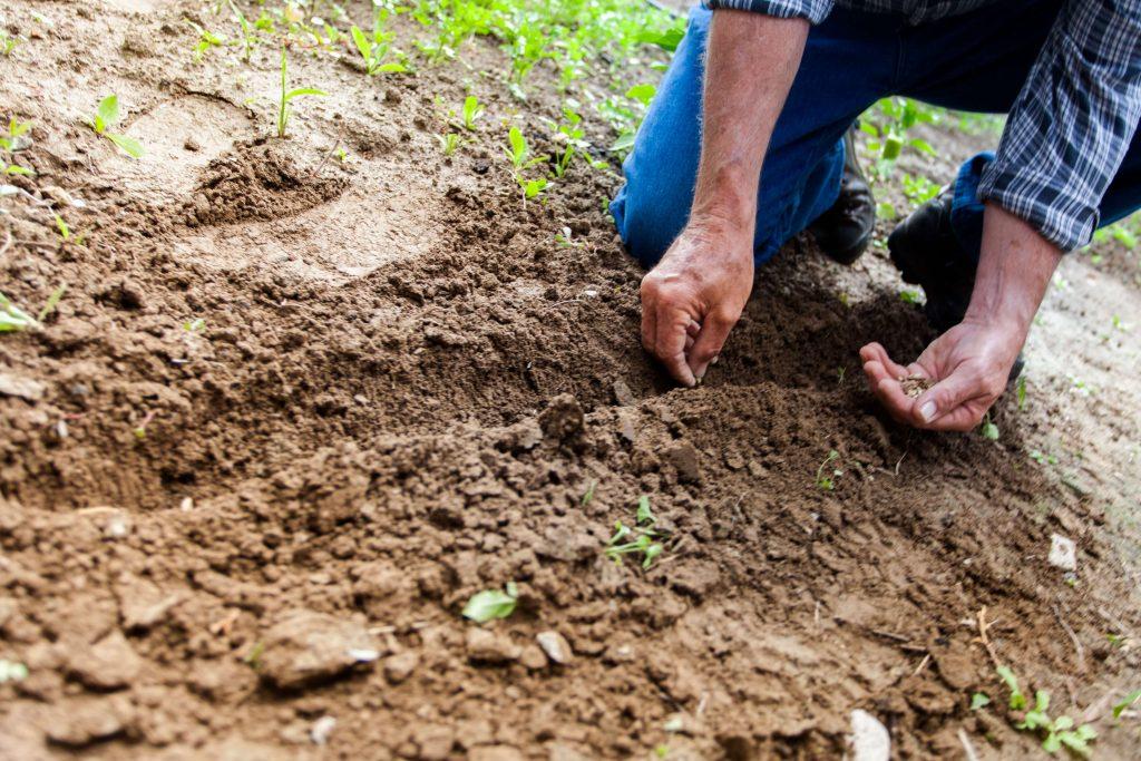 come seminare le piante di pomodori