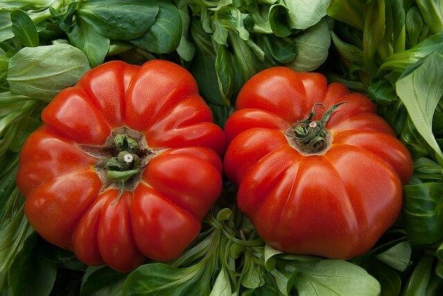 coltivare pomodori cuore di bue