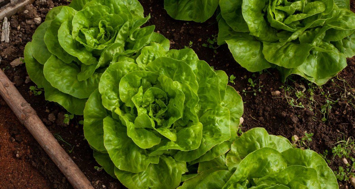 salad-4267063_1280
