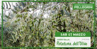 7-03-20-corso-potatura-olivo-Pellegrini