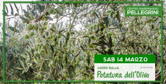 14-marzo-2020-corso-potatura-olivo-pellegrini