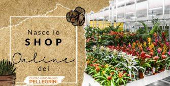shop-online-centro-giardinaggio-pellegrini
