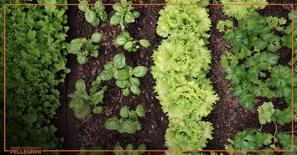 cosa-coltivare-nell-orto-in-balcone