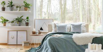 piante-in-camera-da-letto-quali-scegliere