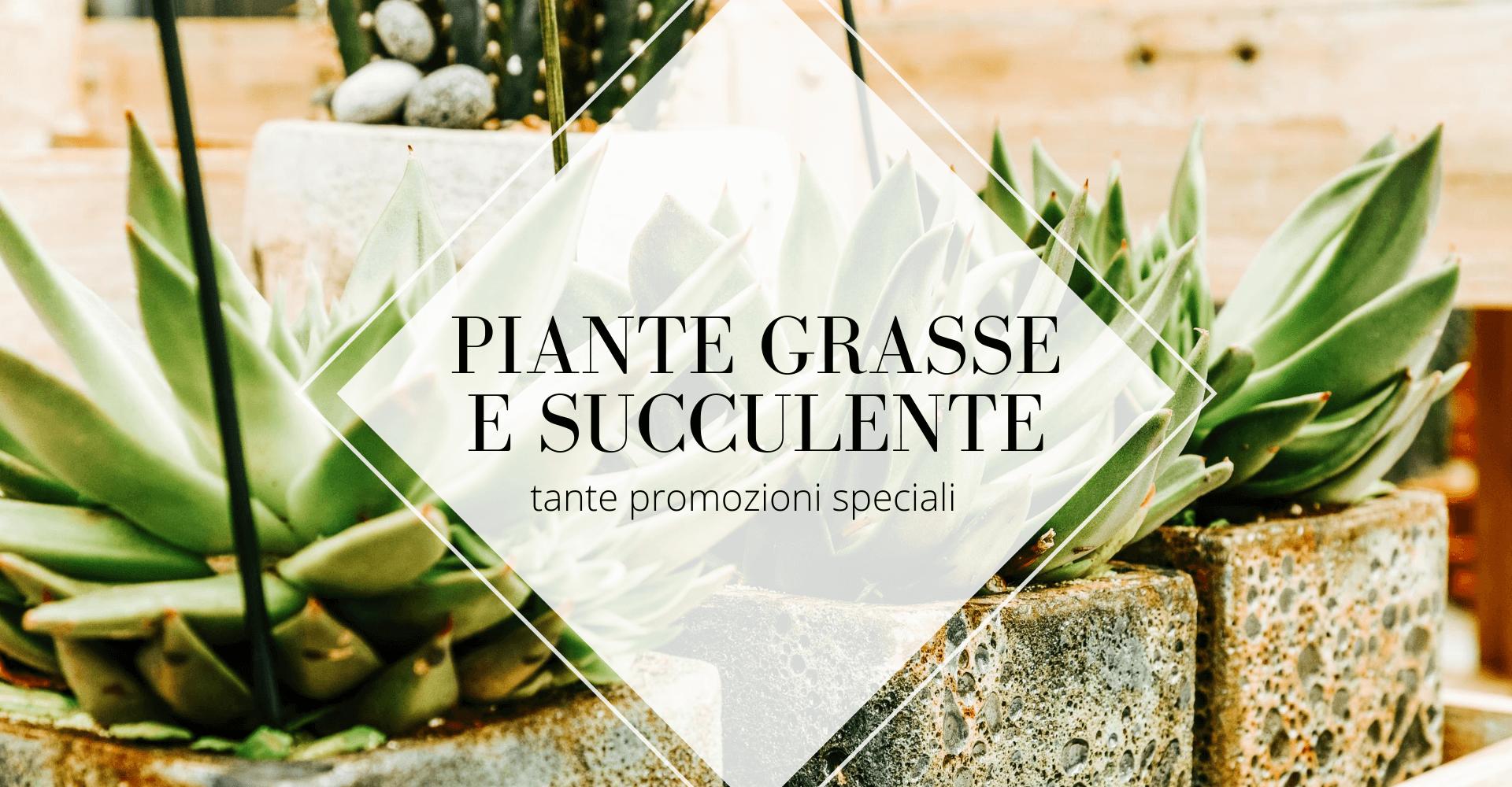 Piante grasse e succulente Centro Giardinaggio Pellegrini
