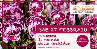 corso-online-orchidee