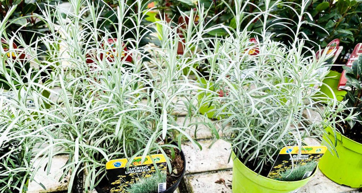 marzo-mese-orto-aromatiche-centro-giardinaggio-pellegrini9