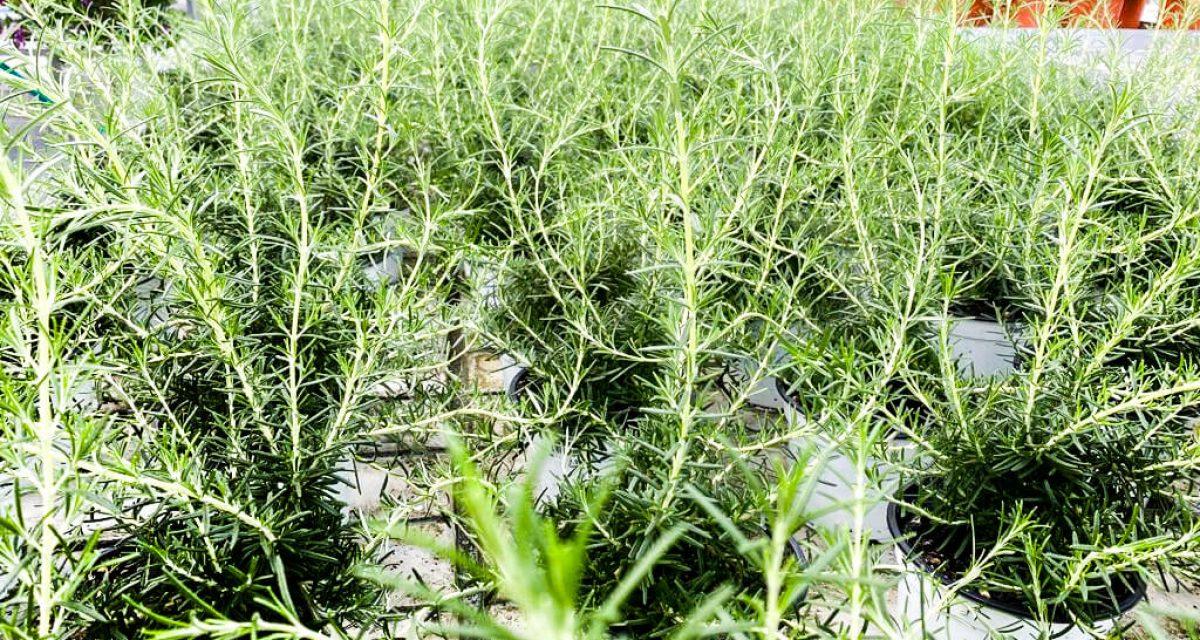 marzo-mese-orto-aromatiche-centro-giardinaggio-pellegrini11