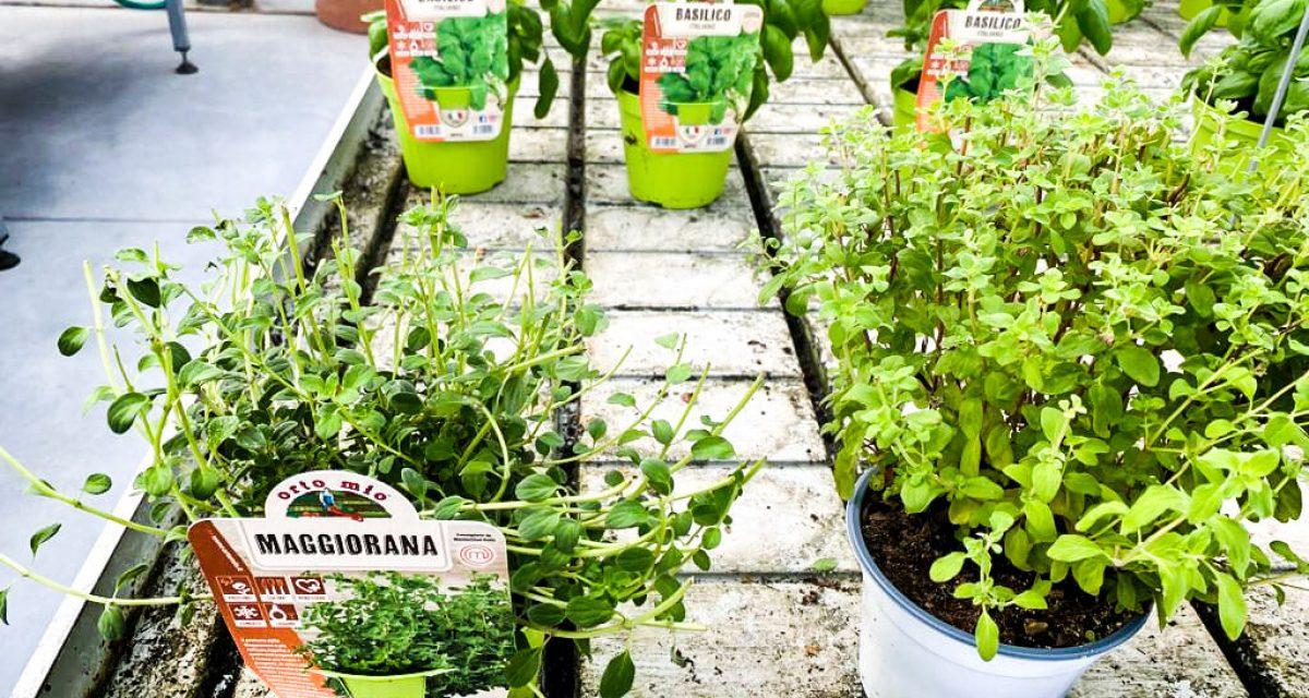 marzo-mese-orto-aromatiche-centro-giardinaggio-pellegrini5