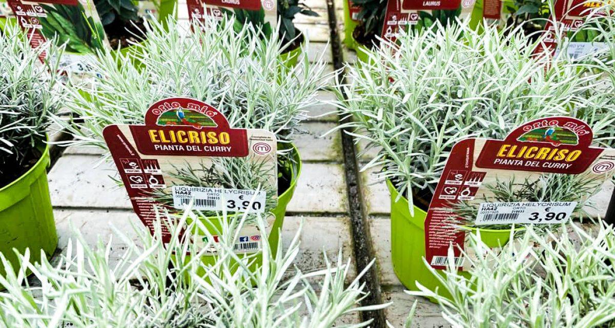 marzo-mese-orto-aromatiche-centro-giardinaggio-pellegrini8
