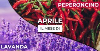 aprile-mese-peperoncino-e-lavanda
