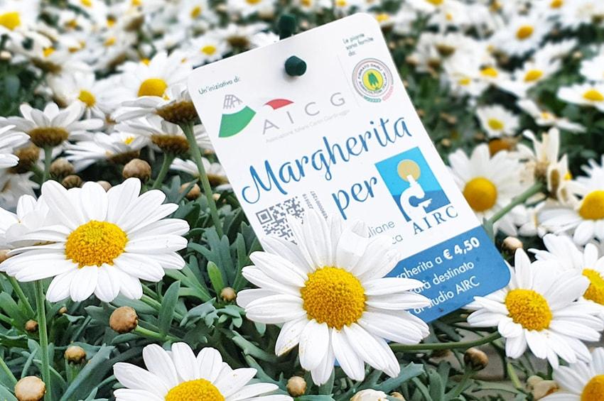 lotta_tumori-Margherita_per_Airc_2019-min