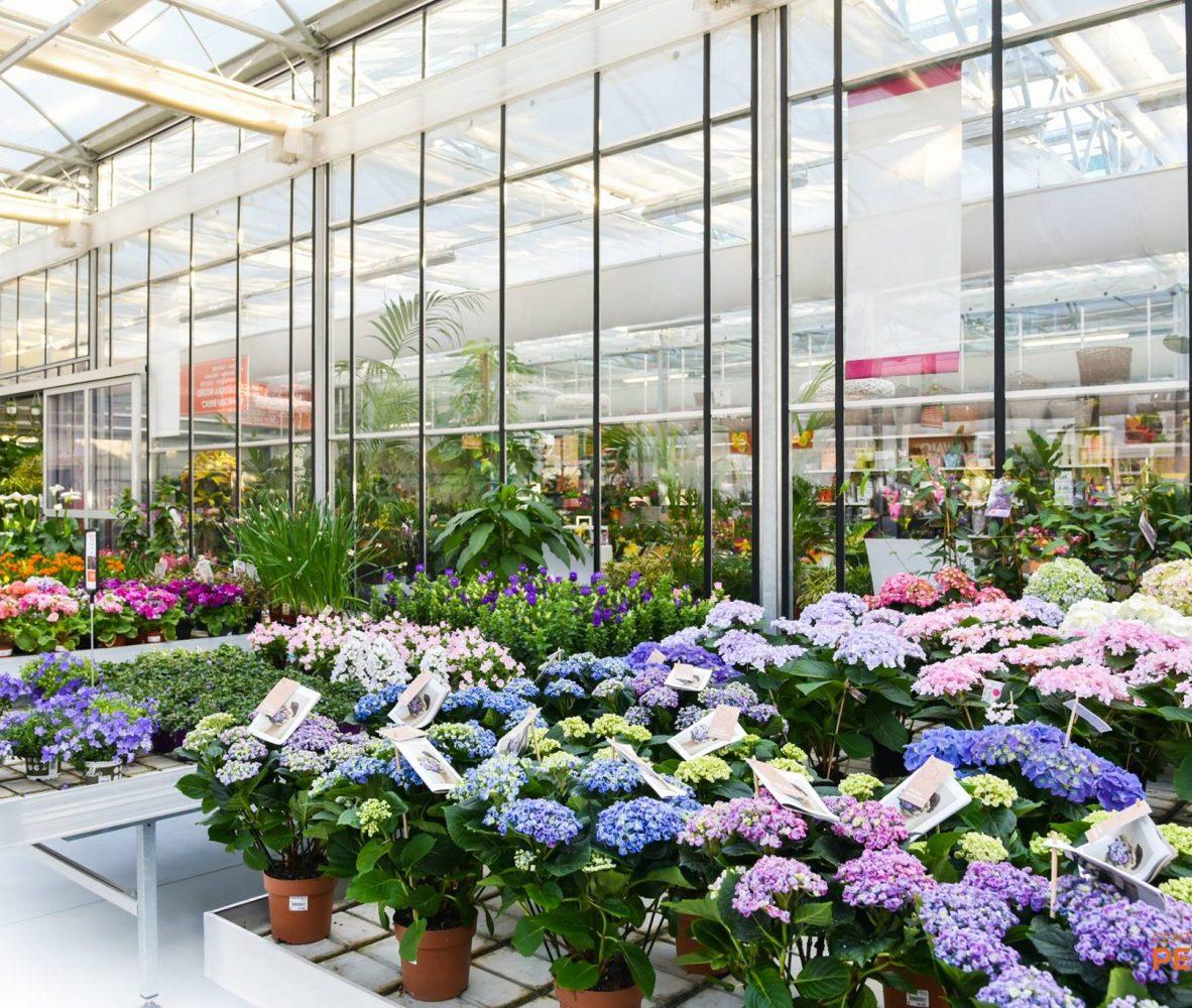 centro-giardinaggio-pellegrini-maggio-mese-rose-e-ortensie_5