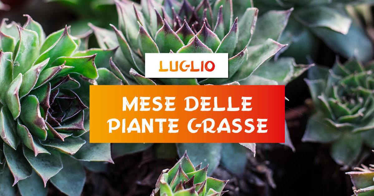 mese-delle-piante-grasse-centro-giardinaggio-pellegrini