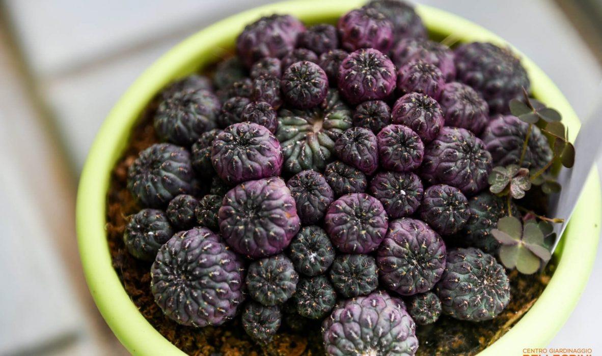 mese_piante_grasse_centro_giardinaggio_pellegrini1