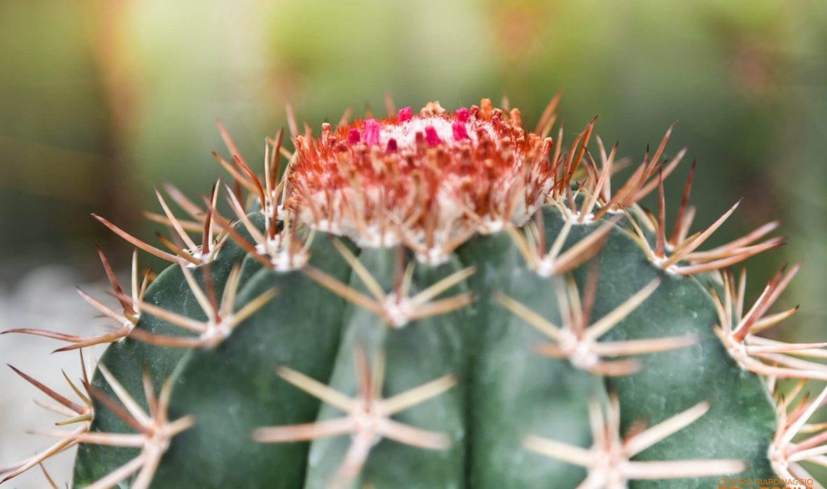 mese_piante_grasse_centro_giardinaggio_pellegrini3