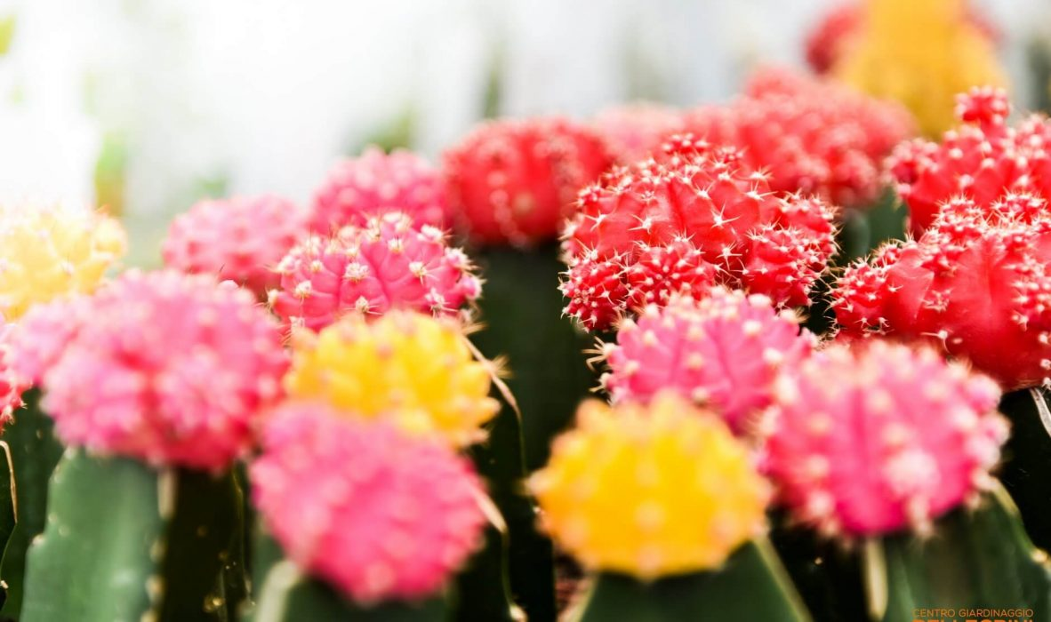 mese_piante_grasse_centro_giardinaggio_pellegrini5