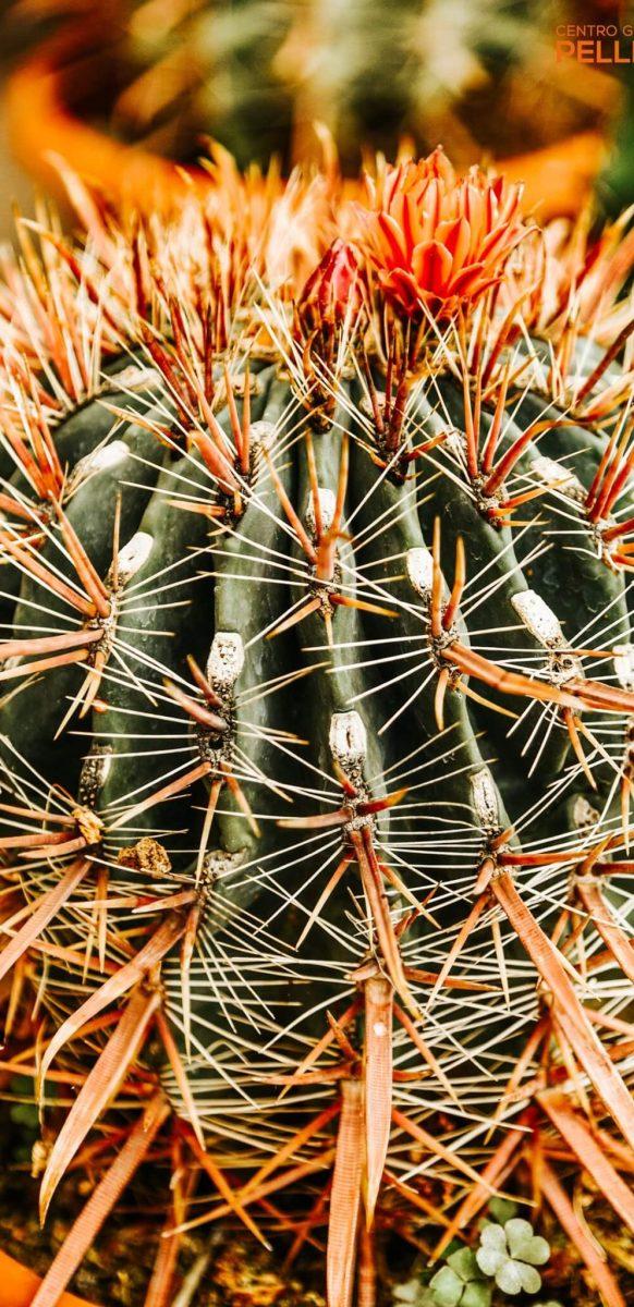 mese_piante_grasse_centro_giardinaggio_pellegrini7