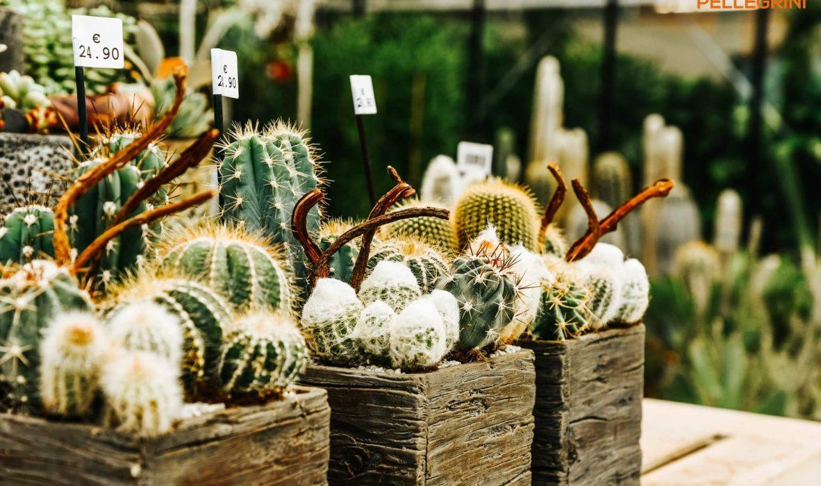 mese_piante_grasse_centro_giardinaggio_pellegrini8