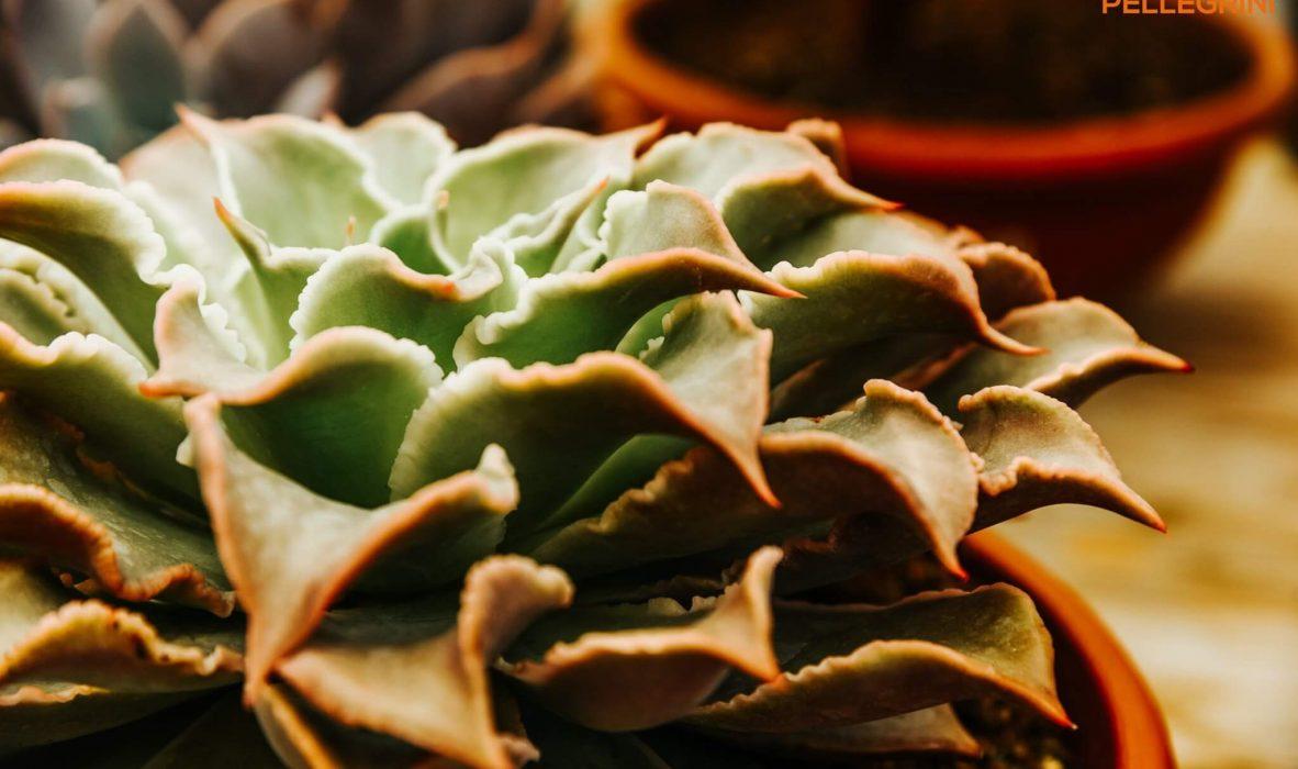 mese_piante_grasse_centro_giardinaggio_pellegrini9