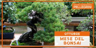 mese-del-bonsai-pellegrini