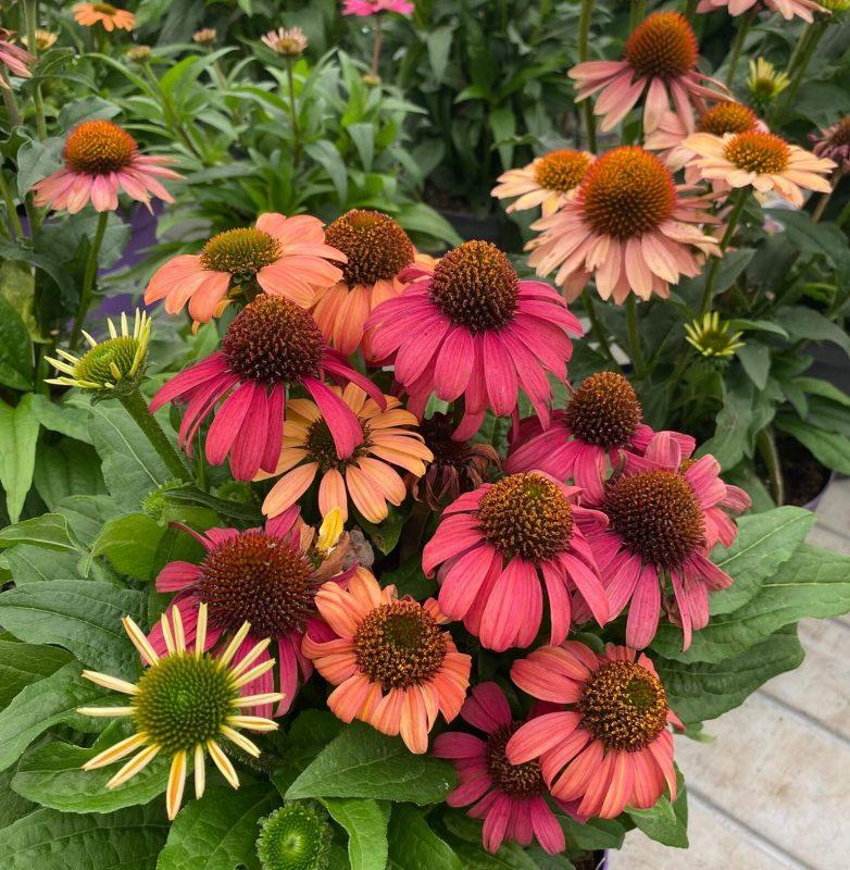 autunno-colori-nuova-primavera1