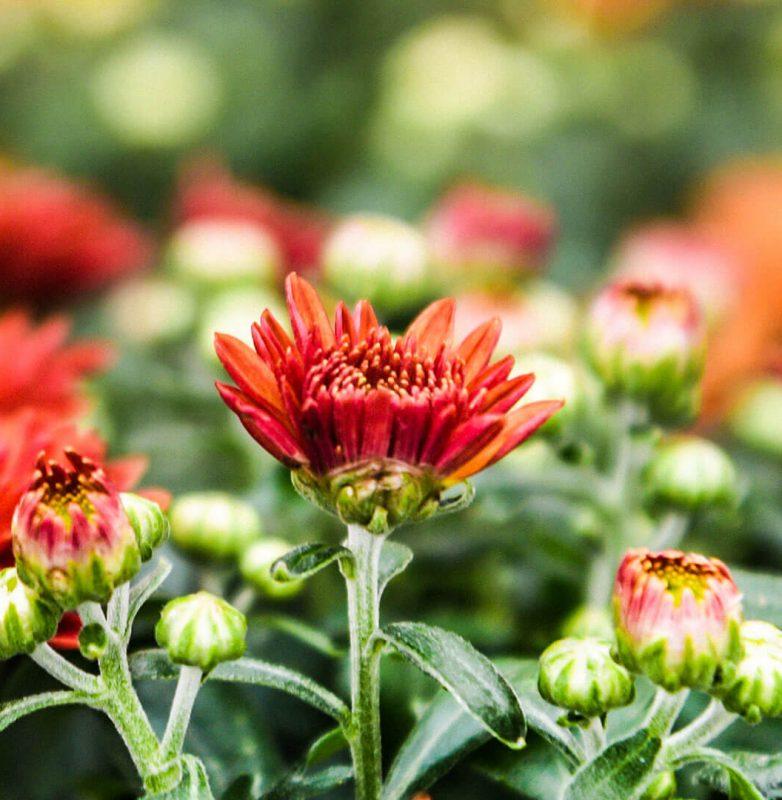 autunno-colori-nuova-primavera10