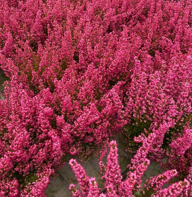 autunno-colori-nuova-primavera2